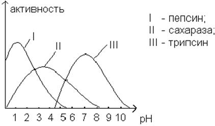 pepsin ph experiment essay Essay writing guide pepsin ph experiment after finishing the practical section of this experiment, i recorded all the results in a table and constructed two graphs.